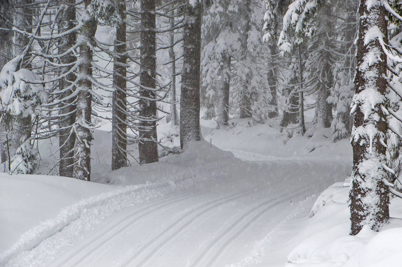 Loipen Und Schneebericht Loipennetze Wachsen Deutlich Xc Ski De